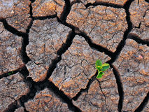 single-green-plant-dry-cracked-soil-14555541